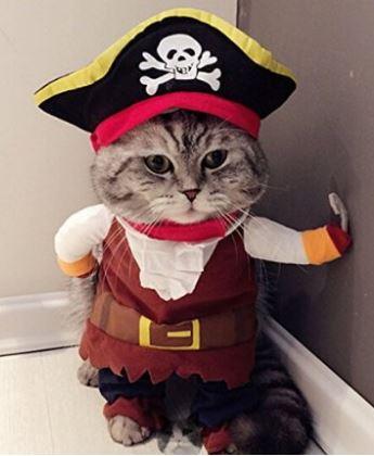 pirate-cat-costume