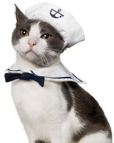 sailor-cat-costume
