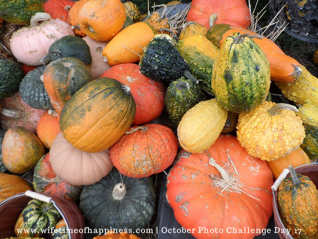 october photo challenge 2017 day 17 harvest
