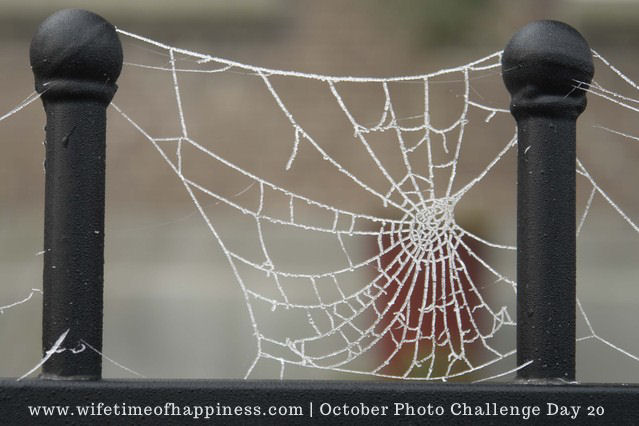 october photo challenge 2017 day 20 web