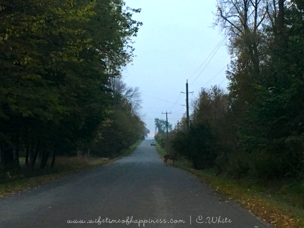 october photo challenge 2017 day 26 8am view wifetime of happiness
